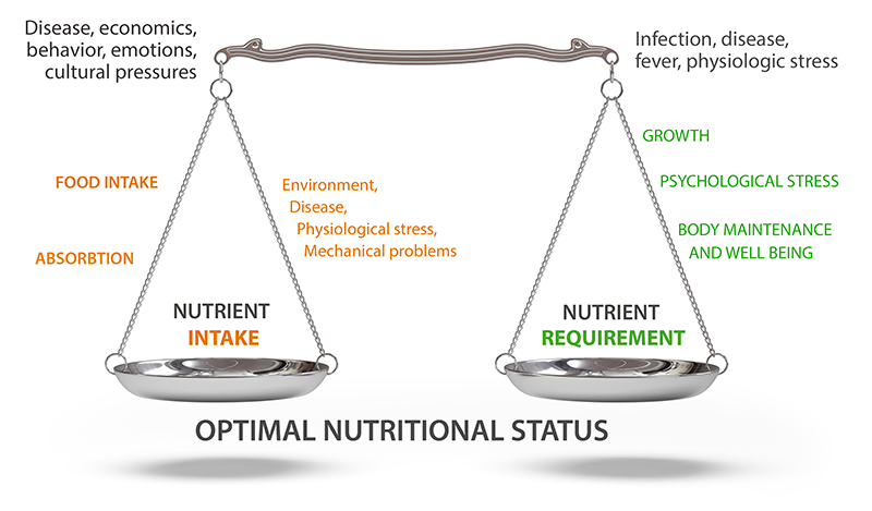 optimal nutrition